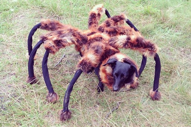 Mutant Giant Spider Dog