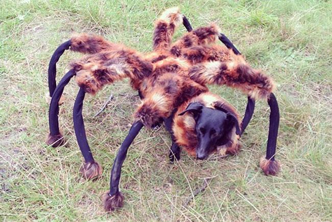 Youtube Mutant Giant Spider Dog